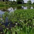 写真: 爽やかな池♪