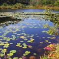 写真: 一沼の秋