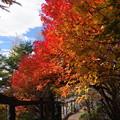 写真: 稜線の紅葉