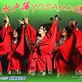 写真: 水戸藩YOSAKOI連_15 - 良い世さ来い2010 新横黒船祭