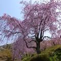 東谷山フルーツパーク (1)