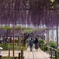 曼陀羅寺公園 (42)