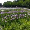 庄内緑地公園 (1)
