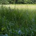 吉賀池湿地 (4)