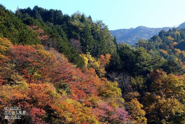 写真: 付知峡・宮の上橋付近 (4)