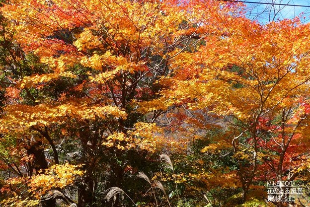 関市杉原 (10)