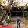 祖父江イチョウ黄葉祭り (4)