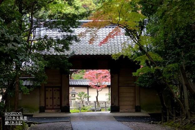写真: 妙興寺 (1)総門