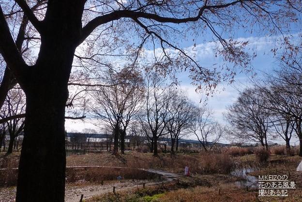 写真: 木曽川水園 (10)