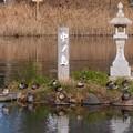 写真: 木曽川水園 (21)