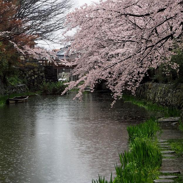 Photos: 水郷の春