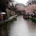写真: 雨の近江水郷 その2