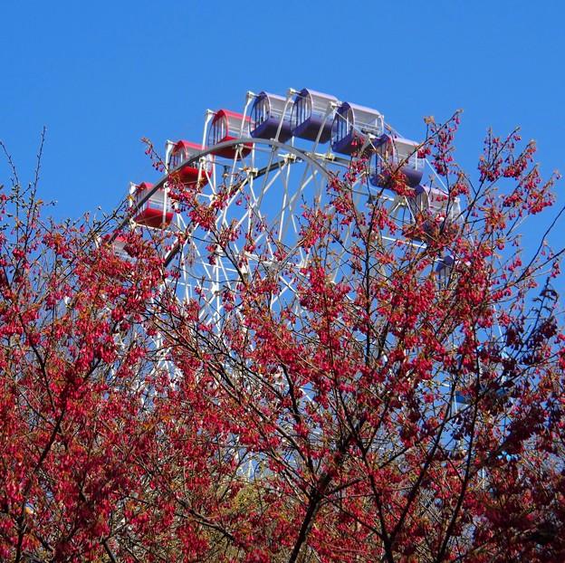 春の遊園地