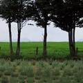 写真: ひるがの高原