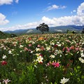 写真: 山雲