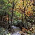 写真: 秋のせせらぎ