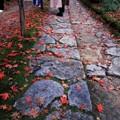 Photos: 深まる秋