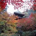 写真: 秋色従えて
