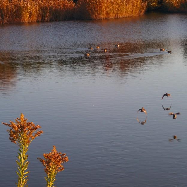写真: 池を見ていた午後