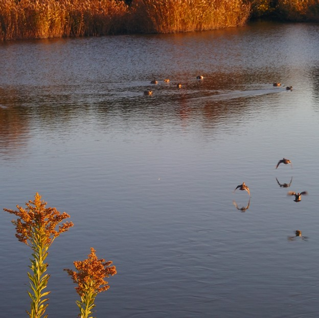 Photos: 池を見ていた午後