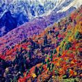 写真: 秋の大仙