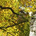 写真: 秋陽に輝く