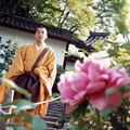 奈良長谷寺・お坊さんと牡丹