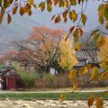 2017・11 ある村の秋