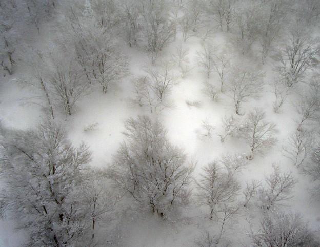雪に埋もれ