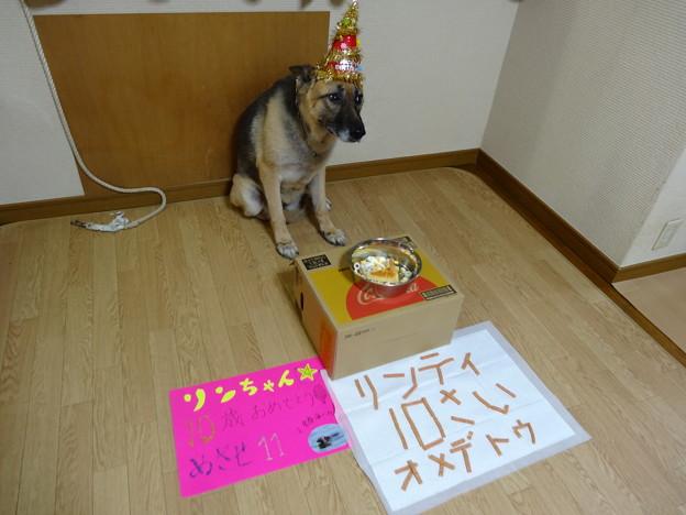 リンちゃん10歳誕生日
