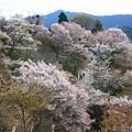 吉野山・上の千本