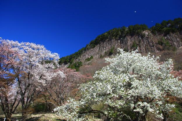 屏風岩公苑と桜