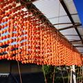 写真: 串柿の里