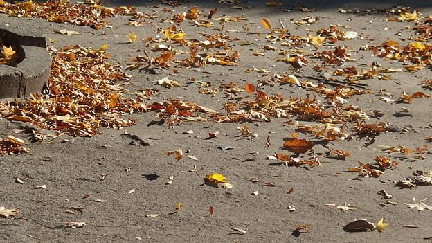 風に流れる落ち葉