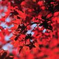 写真: 小松寺-5