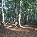 写真: 夏のブナ林