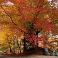 Photos: 紅葉 (2)