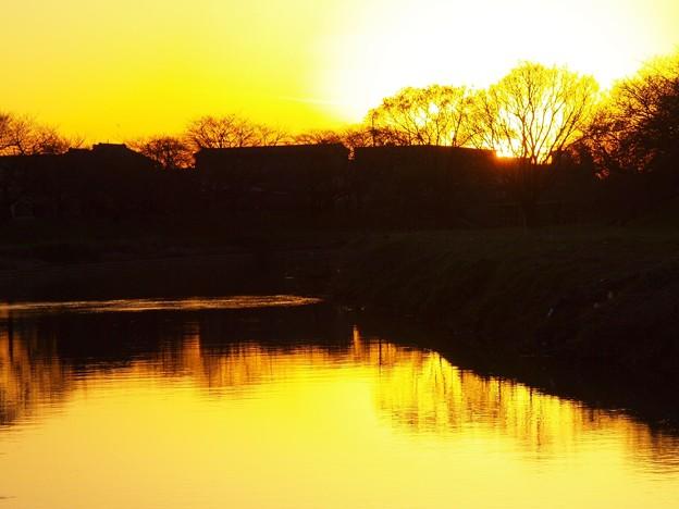 写真: 黄金いろの木立