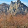 写真: 妙義山と冬枯れ