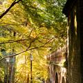 Photos: 秋の水路閣を北側より