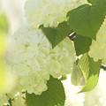 Photos: 白いお花にかくれんぼ~♪