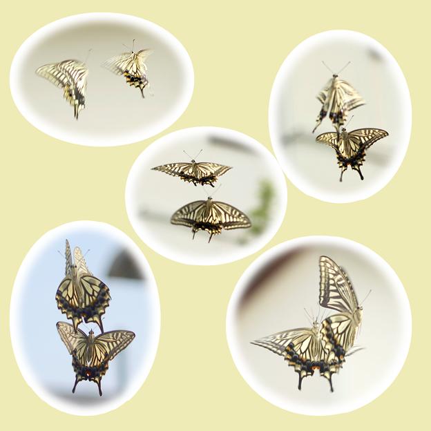 蝶々1~♪