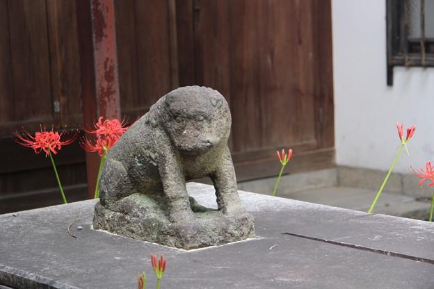 お猿さんの狛犬「吽」~♪