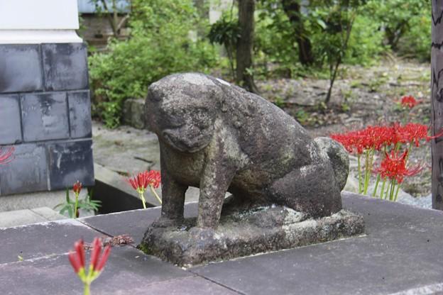 お猿さんの狛犬「阿」~♪