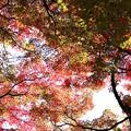 赤く染まって~鶴仙峡~♪