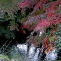 川にそそぐモミジ~鶴仙峡~♪