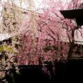 写真: 角館武家屋敷-01405