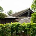 Photos: 日本の夏-01562