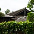 Photos: 日本の夏-01561