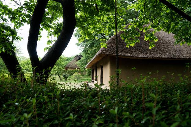 日本の夏-01581